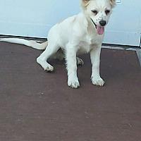 Adopt A Pet :: OLLIE - Cranston, RI