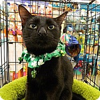 Adopt A Pet :: Annabell - The Colony, TX
