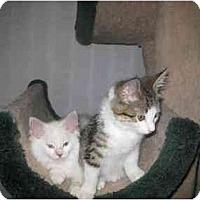 Adopt A Pet :: Herbie - Lethbridge, AB