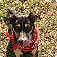 Adopt A Pet :: Sassy - Bluff city, TN