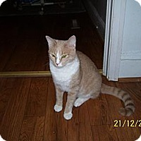 Adopt A Pet :: Cooper - Monroe, NC