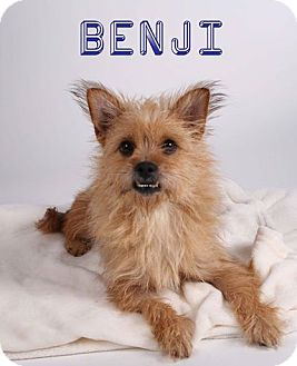 Terrier (Unknown Type, Small) Mix Dog for adoption in Gainesville, Florida - Benji