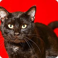 Adopt A Pet :: Marshall - Athens, GA