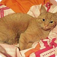 Adopt A Pet :: Pretzel - Edmonton, AB