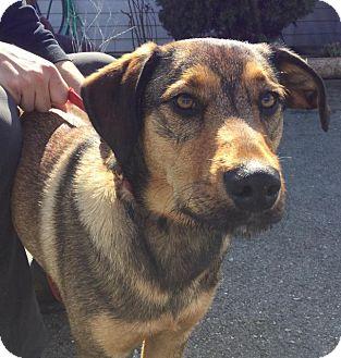 German Shepherd Dog Mix Dog for adoption in Grants Pass, Oregon - Jaxx