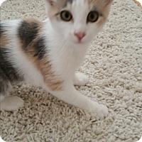 Adopt A Pet :: Ada - Modesto, CA