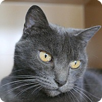 Adopt A Pet :: Cheri - Kingston, WA