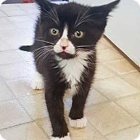 Adopt A Pet :: Wynken - McPherson, KS