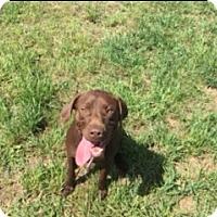 Adopt A Pet :: Bonnie - Traverse City, MI