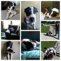 Adopt A Pet :: Lady Bug - Huntington, IN