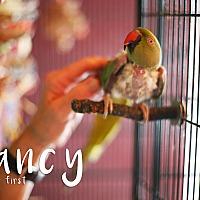 Adopt A Pet :: Nancy - Sylmar, CA