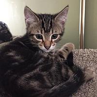 Adopt A Pet :: Texas - Naples, FL