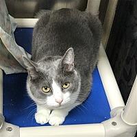 Adopt A Pet :: Gus Jr - Riverside, CA