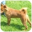 Photo 3 - Shepherd (Unknown Type)/Chow Chow Mix Dog for adoption in Cincinnati, Ohio - Shy
