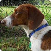Adopt A Pet :: Mikey - Bryan, TX