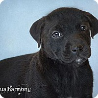 Adopt A Pet :: Carina - Phoenix, AZ