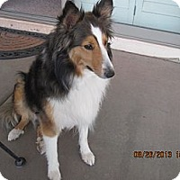Adopt A Pet :: Maddie - apache junction, AZ