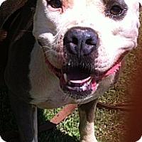Adopt A Pet :: Levi - Blanchard, OK