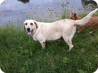 Labrador Retriever Dog for adoption in Houston, Texas - SUSIE