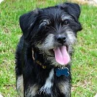 Adopt A Pet :: *Little Tyke - PENDING - Westport, CT