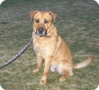 German Shepherd Dog/Mastiff Mix Dog for adoption in Pleasant Grove, California - Eli