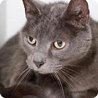 Adopt A Pet :: NUBY - Camarillo, CA