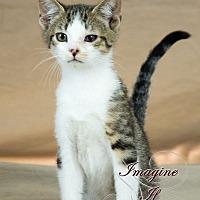 Adopt A Pet :: Neo - Crescent, OK