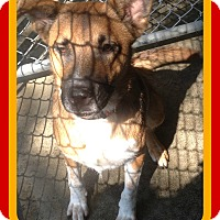 Border Collie Mix Dog for adoption in Jersey City, New Jersey - MUNECA
