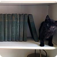 Adopt A Pet :: Watson - Shelbyville, KY