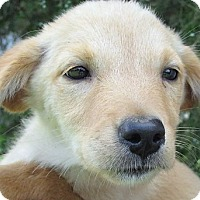 Adopt A Pet :: Summer - Germantown, MD