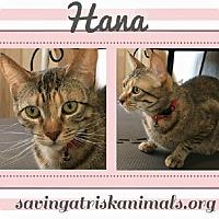 Adopt A Pet :: Hana - Tucson, AZ