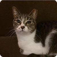 Adopt A Pet :: Lilac - Covington, KY