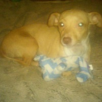 Adopt A Pet :: Willie 2 - Hampton, VA