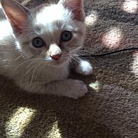 Adopt A Pet :: Charming - San Jose, CA