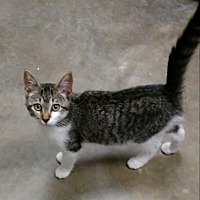 Adopt A Pet :: Sparkles *$20 Fee 8/2-8/31* - Ottawa, KS