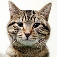 Adopt A Pet :: Peter Jenkins - Philadelphia, PA