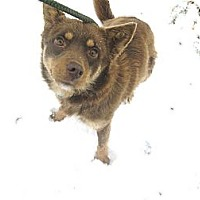 Adopt A Pet :: #029-14  @ Animal Shelter - Zanesville, OH