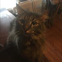 Adopt A Pet :: Molly - East McKeesport, PA