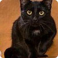 Adopt A Pet :: Tip - Chesapeake, VA
