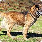 Adopt A Pet :: SHADOW
