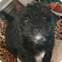 Adopt A Pet :: Morty - San Diego, CA