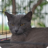 Adopt A Pet :: Stinky Russia - Brooklyn, NY