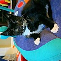 Adopt A Pet :: Sir Tux - Vacaville, CA