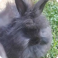 Adopt A Pet :: Nora - Boston, MA