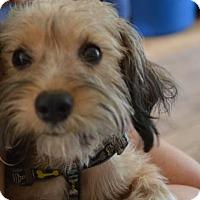 Adopt A Pet :: Skye - Hedgesville, WV