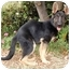 Photo 1 - German Shepherd Dog Puppy for adoption in Los Angeles, California - PUPPY MAX NEEDS A SPECIAL HOME