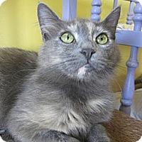 Adopt A Pet :: Josephine - Mobile, AL