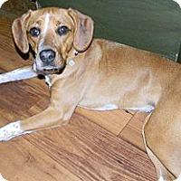 Adopt A Pet :: Libby - cameron, MO