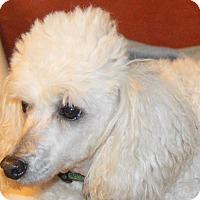 Adopt A Pet :: Dawson - Prole, IA