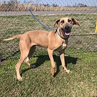 Adopt A Pet :: Ruby - Breaux Bridge, LA